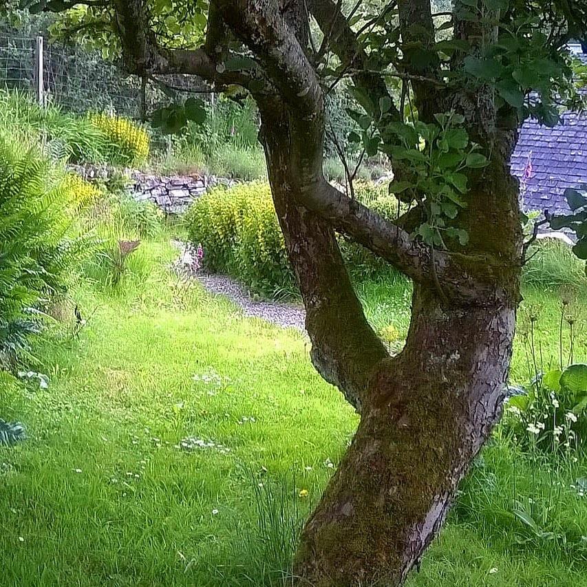 70_year_old_apple_tree_by_RochelleMcConnachie