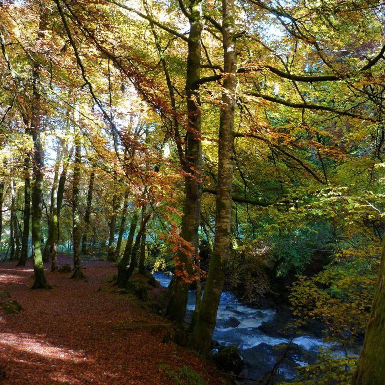 Autumn_Walk_by_RochelleMcConnachie