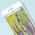 BirchesFoxgloves_PhoneWallpaper_by_RochelleMcConnachie