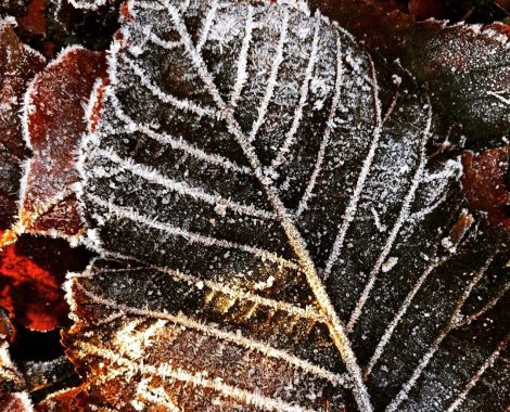 Frozen_Leaf_On _The_Forest_Floor_by_RochelleMcConnachie