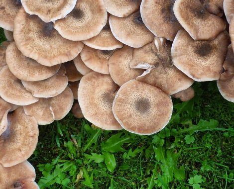 Fungi_by_RochelleMcConnachie